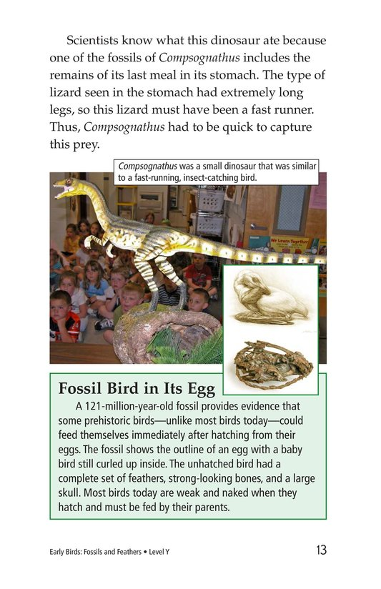 Book Preview For Early Birds: Fossils and Feathers Page 13