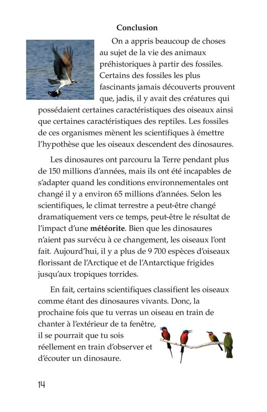 Book Preview For Early Birds: Fossils and Feathers Page 14