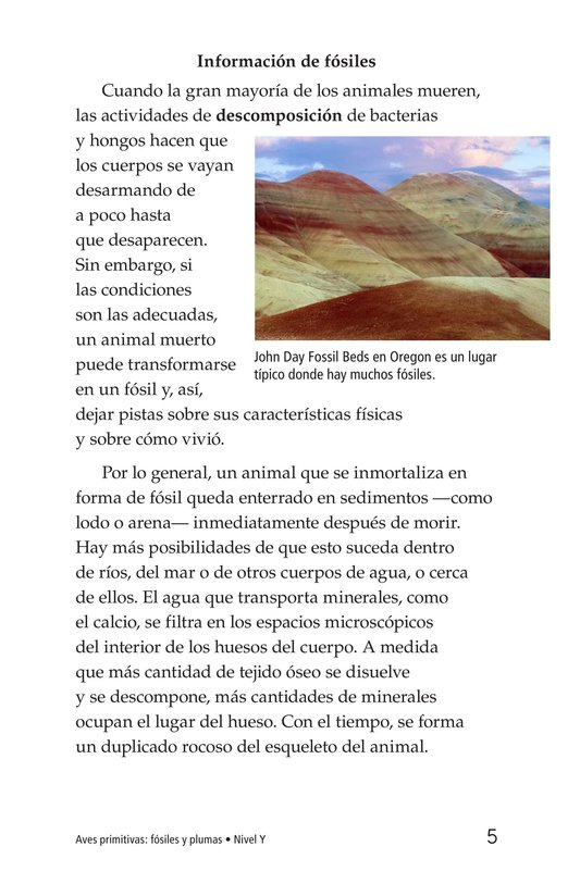 Book Preview For Early Birds: Fossils and Feathers Page 5