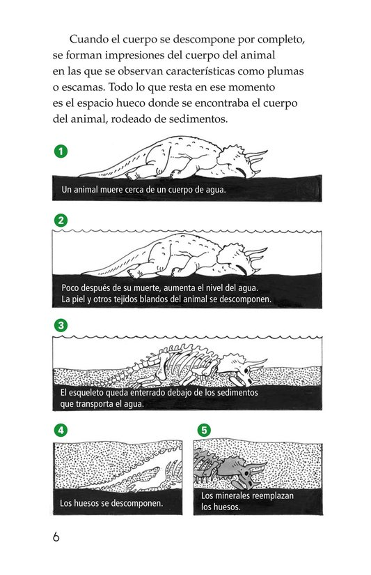 Book Preview For Early Birds: Fossils and Feathers Page 6