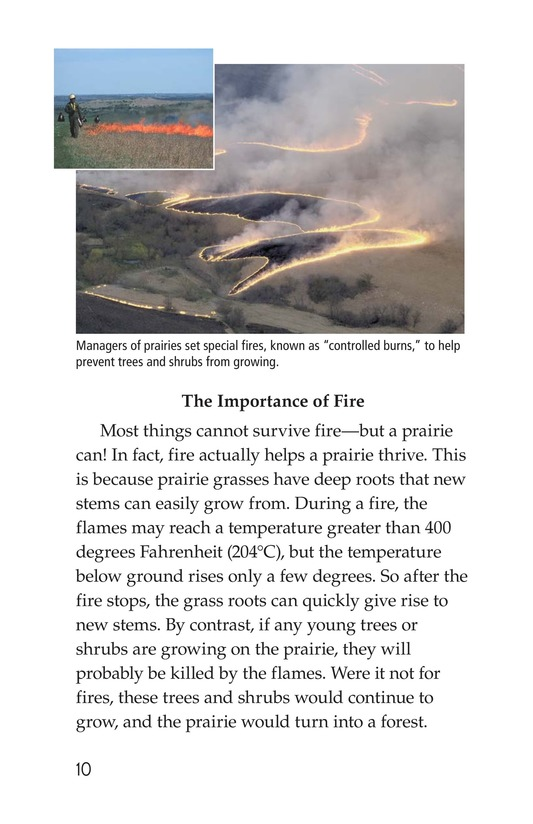 Book Preview For Prairies Alive! Page 10