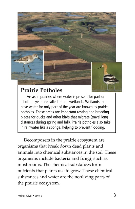 Book Preview For Prairies Alive! Page 13