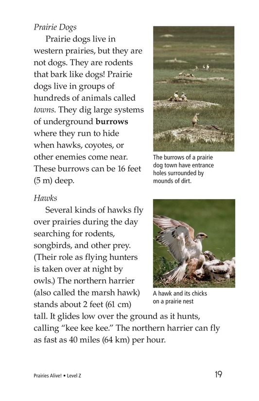 Book Preview For Prairies Alive! Page 19