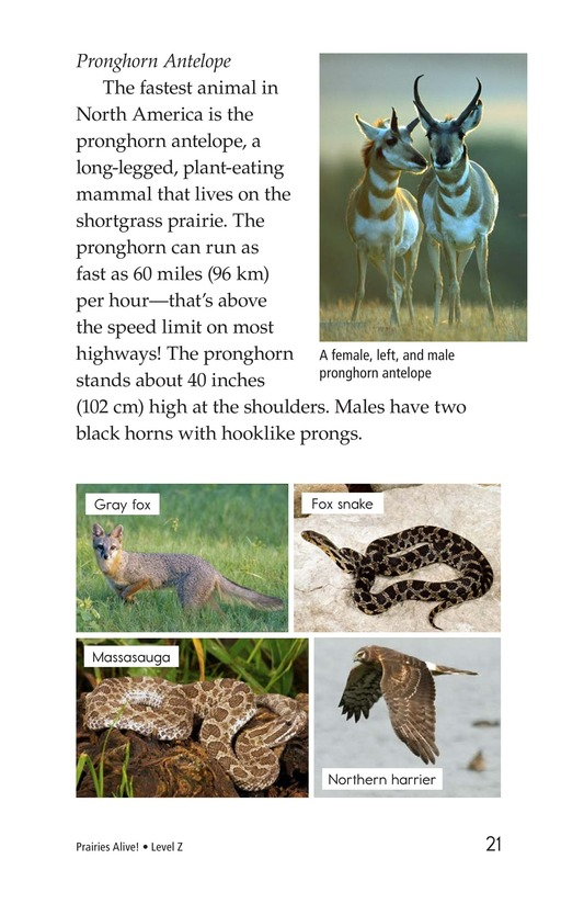 Book Preview For Prairies Alive! Page 21