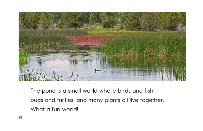 Book Preview For Life at the Pond Page 14