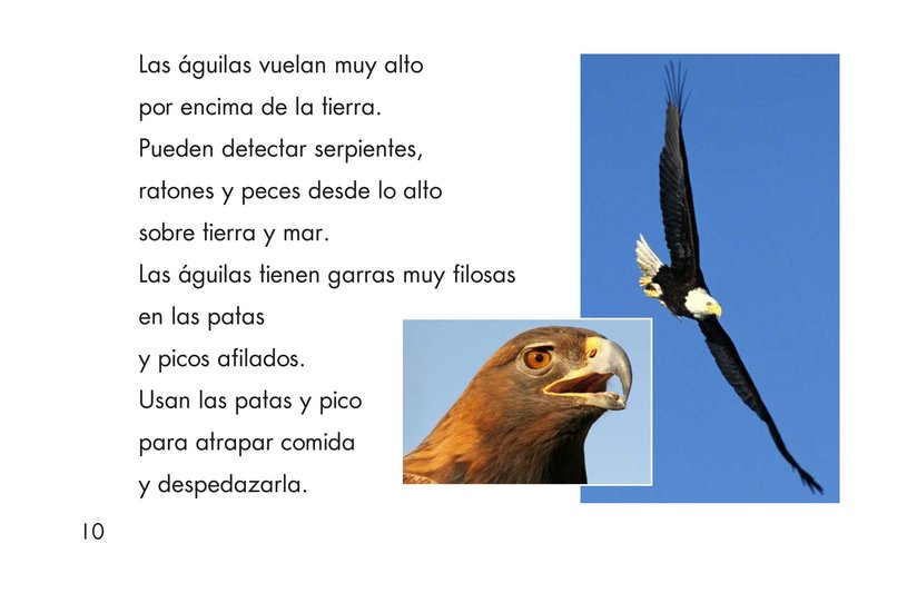 Book Preview For Birds Page 10