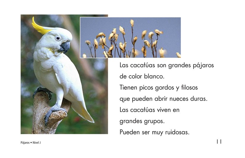 Book Preview For Birds Page 11