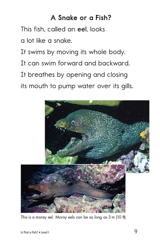 Book Preview For Is That a Fish? Page 9