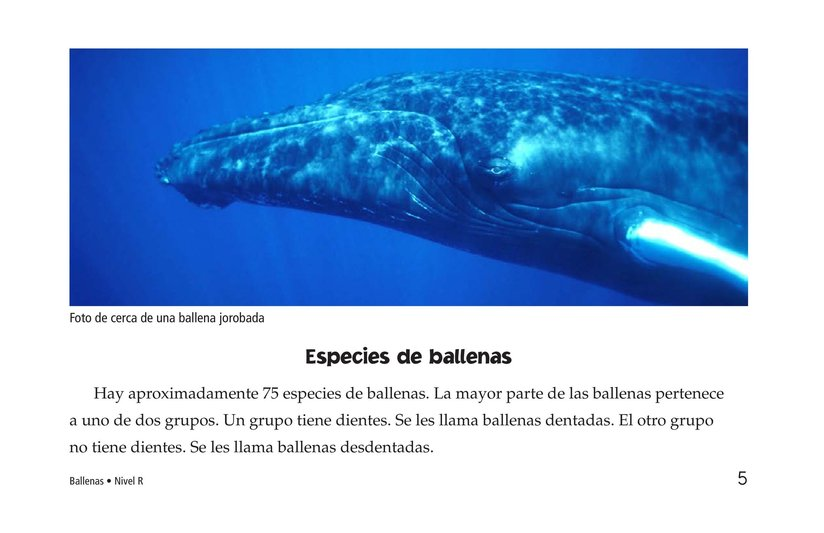 Book Preview For Whales Page 5