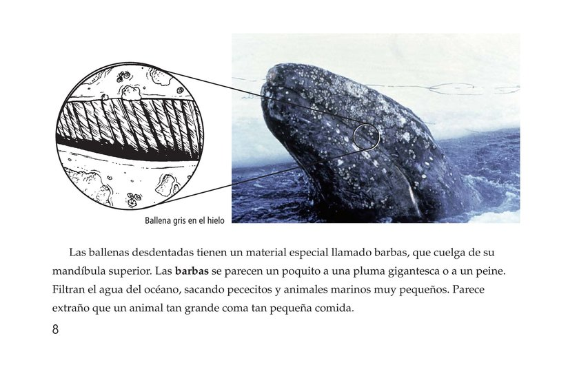 Book Preview For Whales Page 8
