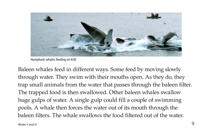 Book Preview For Whales Page 9