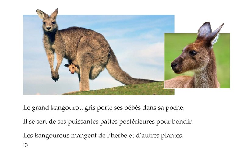 Book Preview For Animals, Animals Page 10