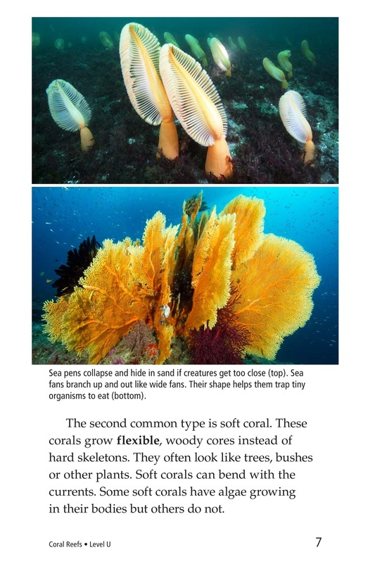 Book Preview For Coral Reefs Page 7