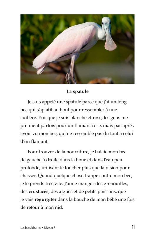 Book Preview For Weird Bird Beaks Page 11