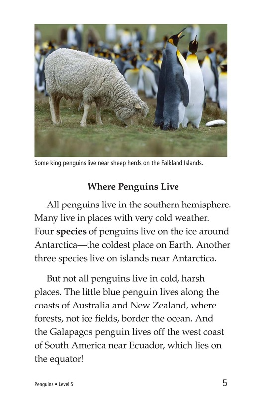 Book Preview For Penguins Page 5