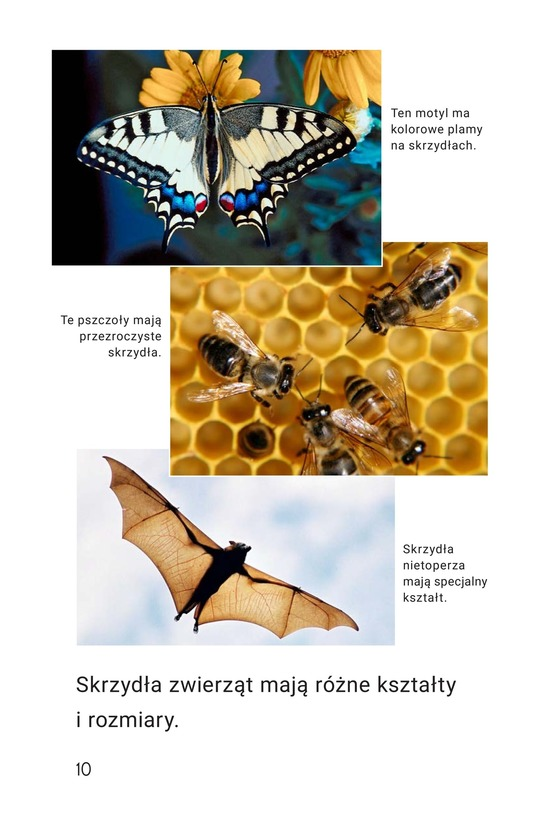 Book Preview For Legs, Wings, Fins, and Flippers Page 10