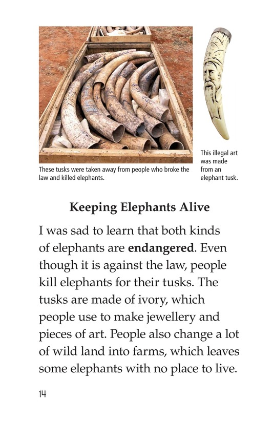 Book Preview For Elephants Page 14
