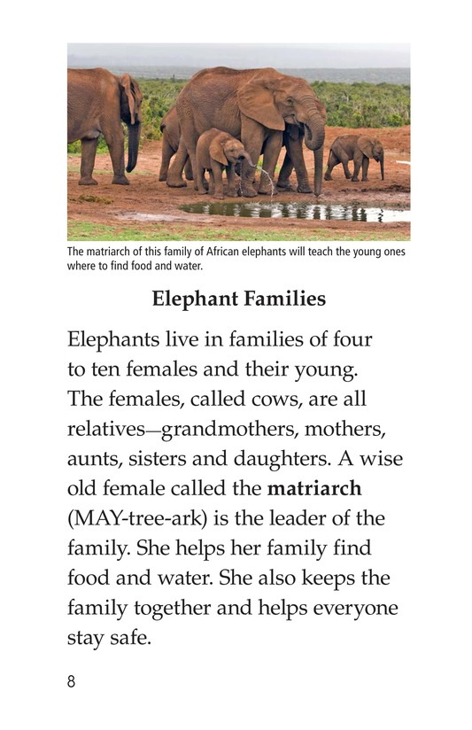 Book Preview For Elephants Page 8