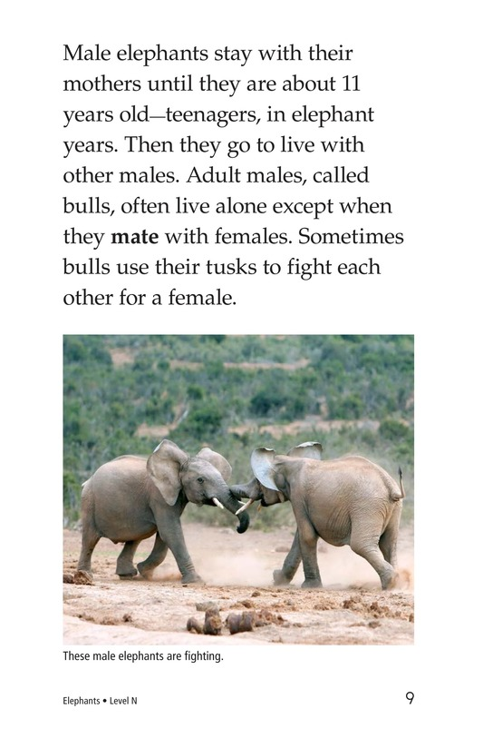 Book Preview For Elephants Page 9