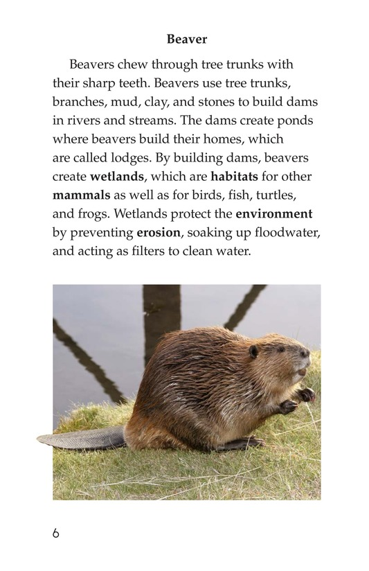Book Preview For Wonders of Nature Page 6
