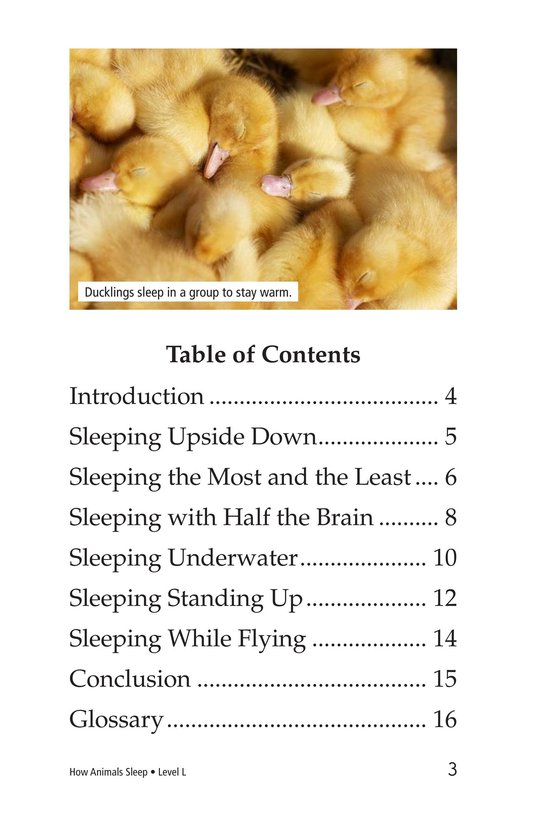Book Preview For How Animals Sleep Page 3