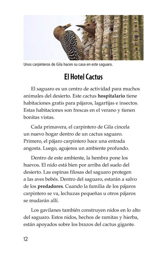 Book Preview For The Mighty Saguaro Cactus Page 12
