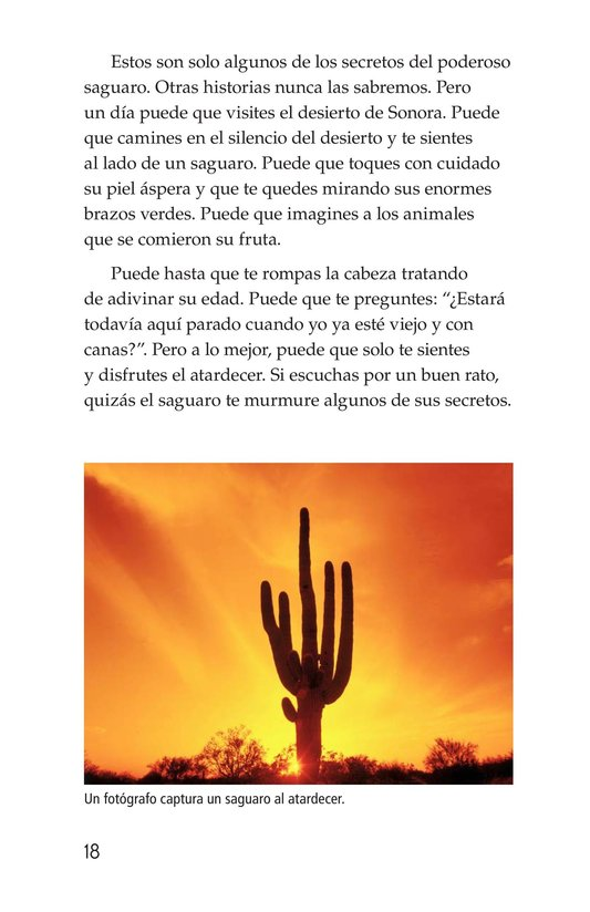 Book Preview For The Mighty Saguaro Cactus Page 18