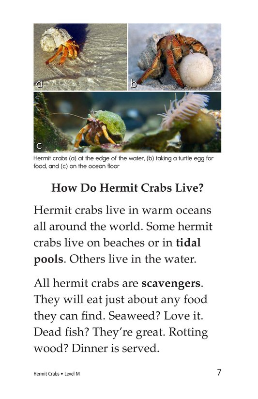 Book Preview For Hermit Crabs Page 7