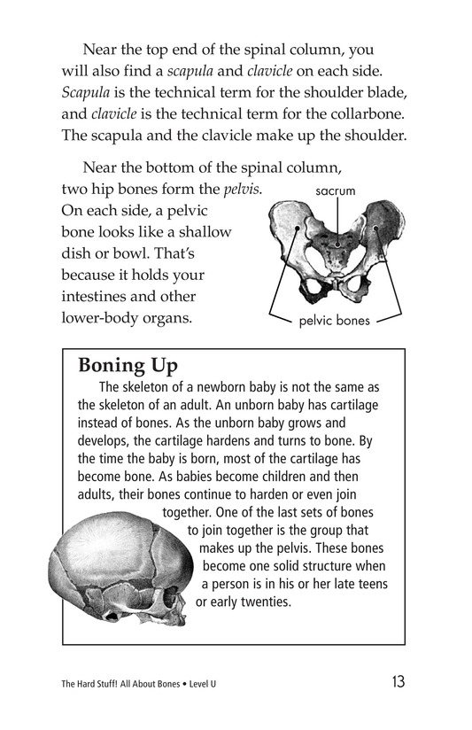 Book Preview For The Hard Stuff! All About Bones Page 13