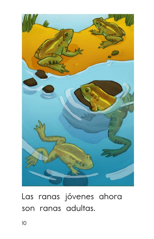 Book Preview For How Frogs Grow Page 10