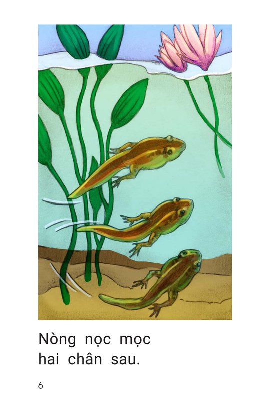 Book Preview For How Frogs Grow Page 6
