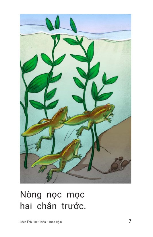 Book Preview For How Frogs Grow Page 7
