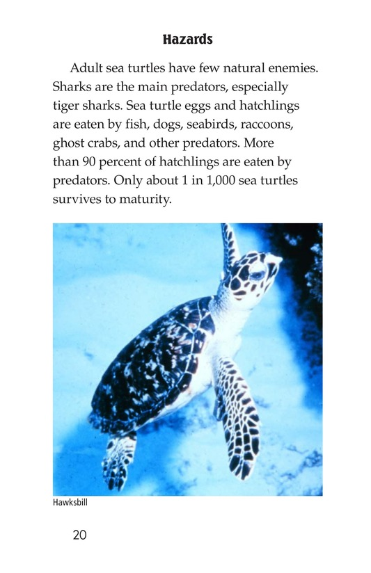 Book Preview For Sea Turtles Page 20