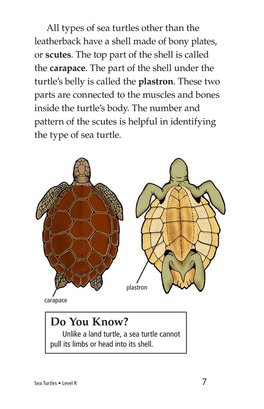 Book Preview For Sea Turtles Page 7