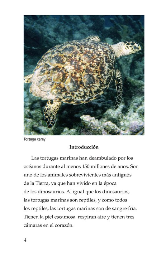 Book Preview For Sea Turtles Page 4