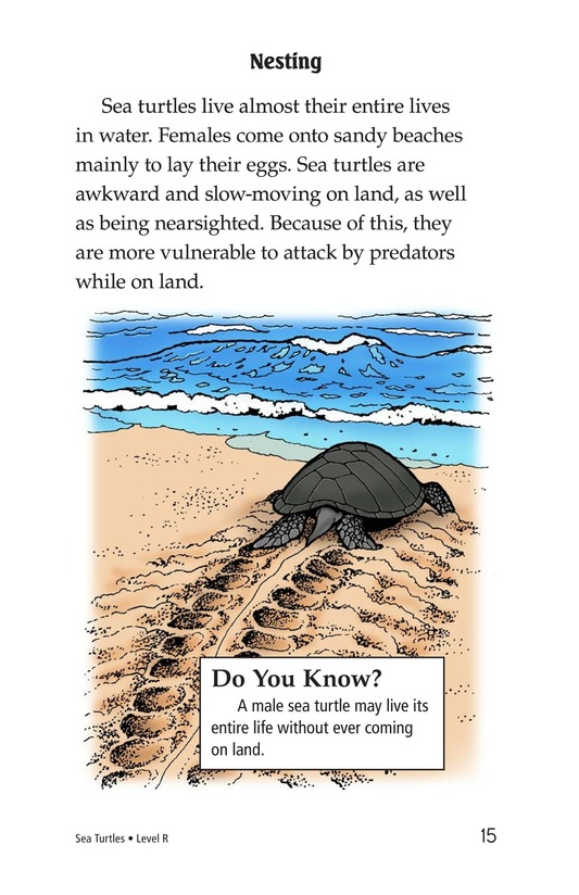 Book Preview For Sea Turtles Page 15