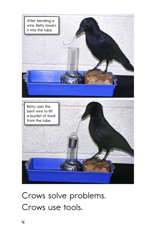 Book Preview For Smart Crows Page 4