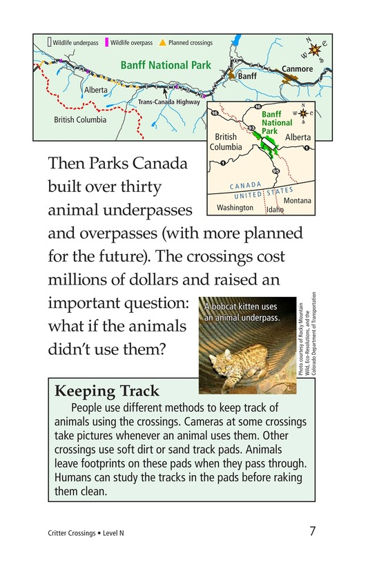 Book Preview For Critter Crossings Page 7