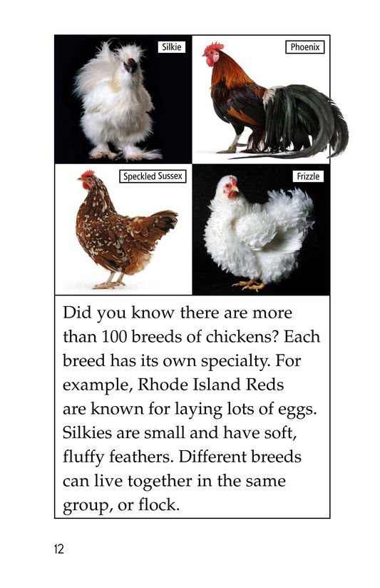 Book Preview For Chickens in My Backyard Page 12