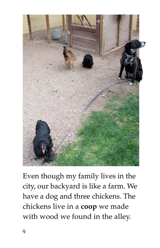 Book Preview For Chickens in My Backyard Page 4
