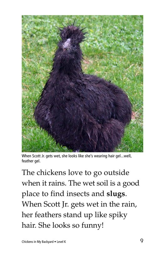 Book Preview For Chickens in My Backyard Page 9