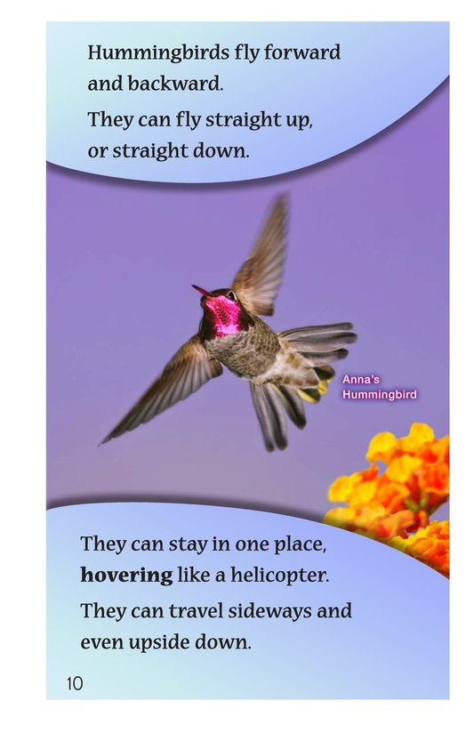 Book Preview For Hummingbirds Page 10