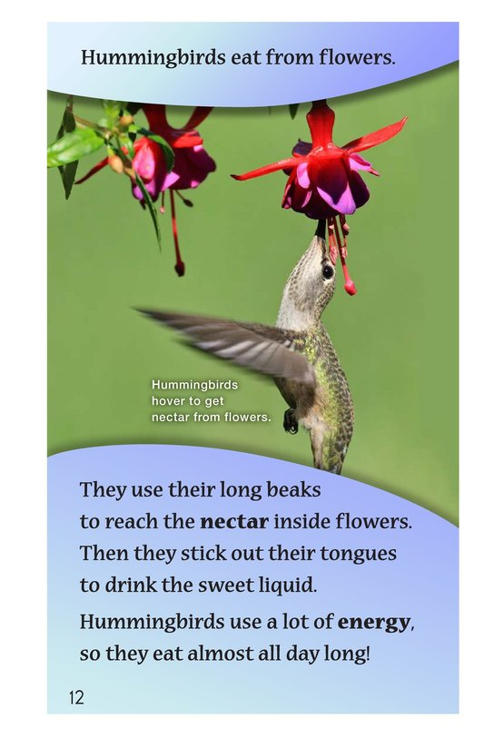 Book Preview For Hummingbirds Page 12