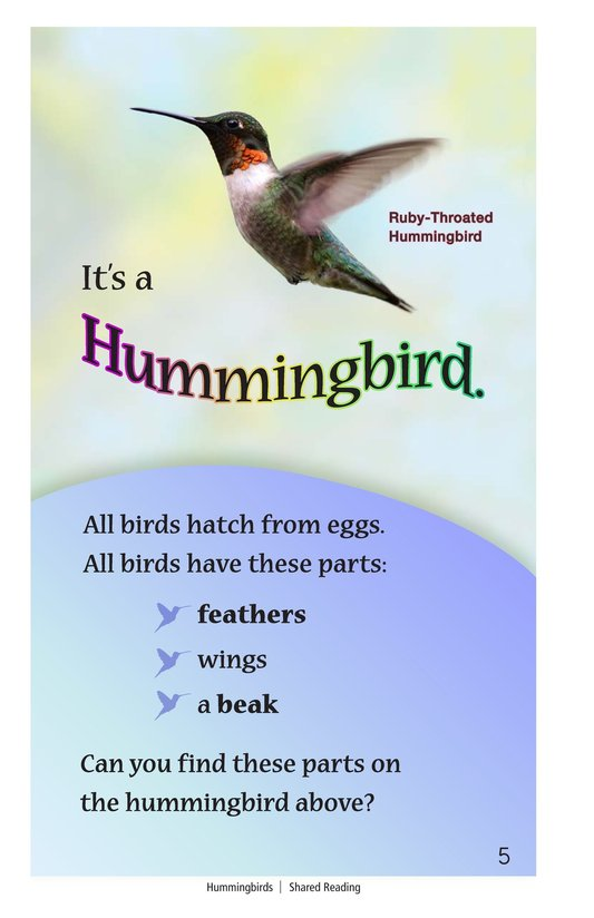 Book Preview For Hummingbirds Page 5