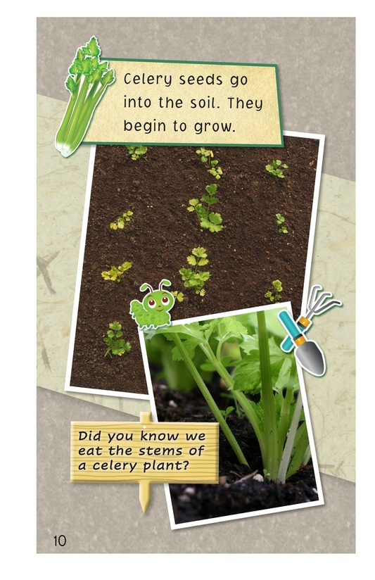 Book Preview For A Backyard Garden Page 10