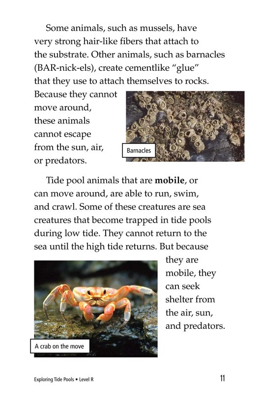 Book Preview For Exploring Tide Pools Page 11