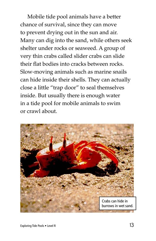 Book Preview For Exploring Tide Pools Page 13