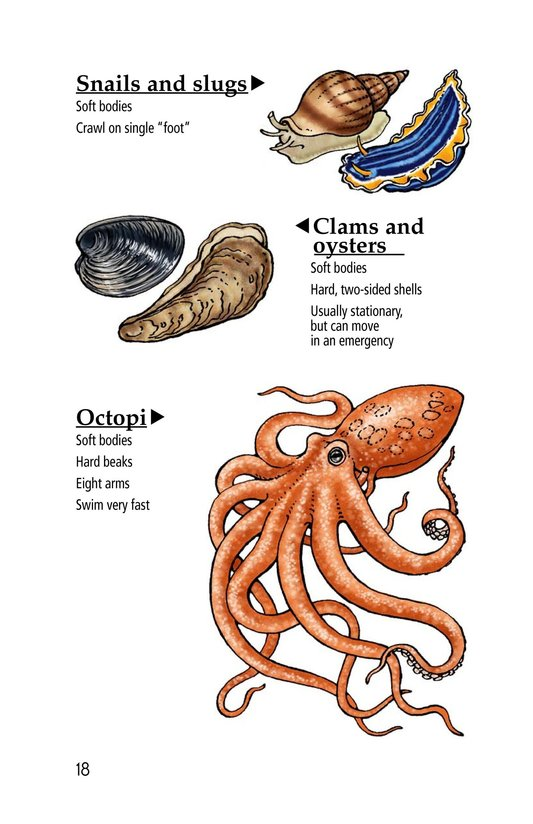 Book Preview For Exploring Tide Pools Page 18