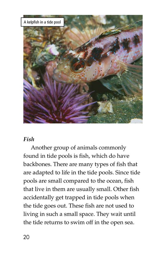 Book Preview For Exploring Tide Pools Page 20