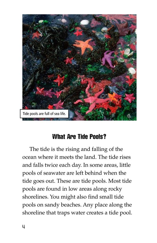 Book Preview For Exploring Tide Pools Page 4